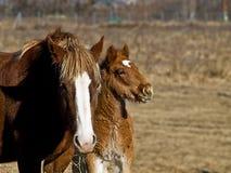 Άλογο μωρών Στοκ εικόνα με δικαίωμα ελεύθερης χρήσης