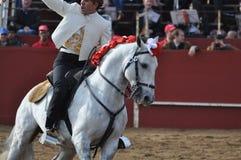 Άλογο πάλης του Bull Στοκ εικόνα με δικαίωμα ελεύθερης χρήσης