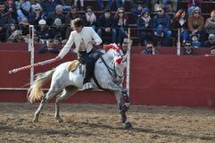 Άλογο πάλης του Bull Στοκ Εικόνες