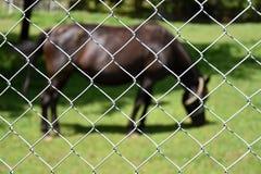 Άλογο πίσω από έναν φράκτη καλωδίων Εστίαση στο φράκτη Στοκ εικόνα με δικαίωμα ελεύθερης χρήσης