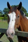 άλογο παρδαλό στοκ φωτογραφία με δικαίωμα ελεύθερης χρήσης