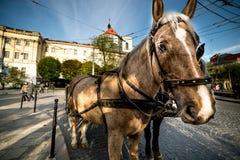 Άλογο παλαιό στενό σε επάνω πόλεων Στοκ φωτογραφία με δικαίωμα ελεύθερης χρήσης