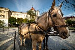 Άλογο παλαιό στενό σε επάνω πόλεων Στοκ Εικόνες