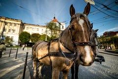 Άλογο παλαιό στενό σε επάνω πόλεων Στοκ εικόνα με δικαίωμα ελεύθερης χρήσης