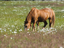 άλογο παλαιό Στοκ εικόνα με δικαίωμα ελεύθερης χρήσης