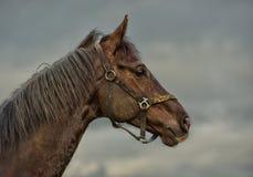 άλογο παλαιό Στοκ φωτογραφία με δικαίωμα ελεύθερης χρήσης