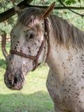 άλογο που επισημαίνετα&iot Στοκ Φωτογραφία