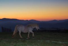 Άλογο που στέκεται κάτω από το ηλιοβασίλεμα Στοκ Εικόνες