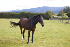 Άλογο που στέκεται μόνο στο αγρόκτημα Στοκ Εικόνες
