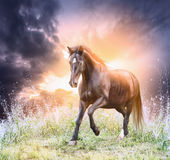 Άλογο που τρέχει τον πράσινο τομέα πέρα από το δραματικό ουρανό Στοκ Φωτογραφίες