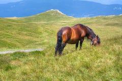 Άλογο που τρώει τη χλόη στο λιβάδι Στοκ φωτογραφία με δικαίωμα ελεύθερης χρήσης