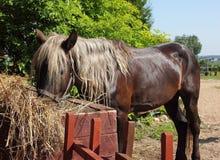 Άλογο που τρώει το σανό Στοκ Φωτογραφίες