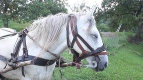 Άλογο που χρησιμοποιείται άσπρο φιλμ μικρού μήκους