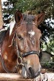 Άλογο προσώπου Στοκ φωτογραφία με δικαίωμα ελεύθερης χρήσης