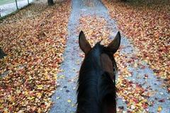 Άλογο πτώσης Στοκ Φωτογραφίες
