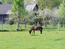 Άλογο πόνι στο λιβάδι Στοκ Φωτογραφίες