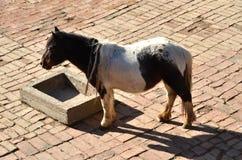 Άλογο πόνι Στοκ φωτογραφία με δικαίωμα ελεύθερης χρήσης
