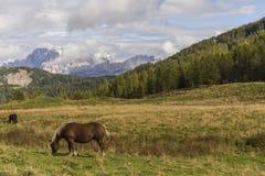 Άλογο σε ένα λιβάδι Στοκ φωτογραφία με δικαίωμα ελεύθερης χρήσης