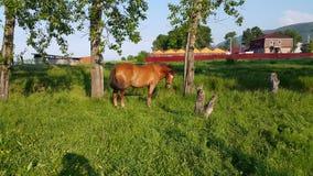 Άλογο σε ένα λουρί Στοκ Εικόνες