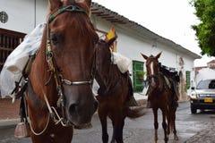 Άλογο σε μια μικρή πόλη Στοκ φωτογραφία με δικαίωμα ελεύθερης χρήσης