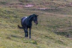 Άλογο στα βουνά Στοκ Εικόνες