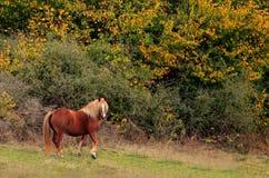 Άλογο στα λιβάδια φθινοπώρου στοκ εικόνες με δικαίωμα ελεύθερης χρήσης