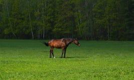 Άλογο στην ελευθερία Στοκ φωτογραφία με δικαίωμα ελεύθερης χρήσης