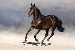 Άλογο στην κίνηση στοκ εικόνα