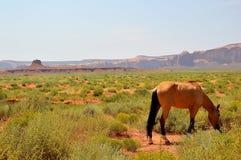 Άλογο στην κοιλάδα μνημείων, ΗΠΑ Στοκ Εικόνες