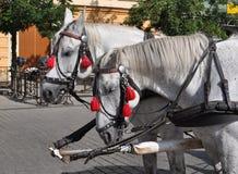 Άλογο στην Κρακοβία - την Πολωνία στοκ εικόνες