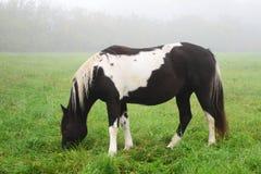 Άλογο στην ομίχλη. Sigulda Στοκ Εικόνα