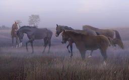Άλογο στην υδρονέφωση Στοκ Εικόνα