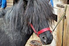 Άλογο στη φύση Πορτρέτο ενός αλόγου, Στοκ φωτογραφία με δικαίωμα ελεύθερης χρήσης