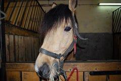 Άλογο στη φύση Πορτρέτο ενός αλόγου, Στοκ φωτογραφίες με δικαίωμα ελεύθερης χρήσης