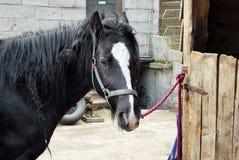 Άλογο στη φύση Πορτρέτο ενός αλόγου, Στοκ Φωτογραφία