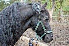 Άλογο στη φύση Πορτρέτο ενός αλόγου, Στοκ εικόνες με δικαίωμα ελεύθερης χρήσης