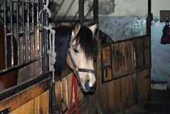Άλογο στη φύση Πορτρέτο ενός αλόγου, Στοκ Εικόνες
