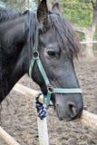 Άλογο στη φύση Πορτρέτο ενός αλόγου, Στοκ εικόνα με δικαίωμα ελεύθερης χρήσης