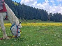 Άλογο στη χλόη Στοκ εικόνα με δικαίωμα ελεύθερης χρήσης