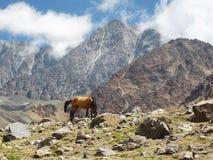 Άλογο στις αργεντινές Άνδεις στοκ εικόνα