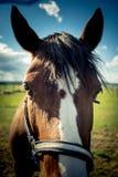 Άλογο στον τομέα στο ηλιόλουστο στήριγμα της Αυστρίας Styria ημέρας Στοκ φωτογραφία με δικαίωμα ελεύθερης χρήσης