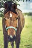 Άλογο στον τομέα στο ηλιόλουστο στήριγμα της Αυστρίας Styria ημέρας Στοκ εικόνες με δικαίωμα ελεύθερης χρήσης