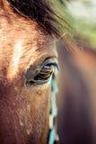 Άλογο στον τομέα στο ηλιόλουστο στήριγμα της Αυστρίας Styria ημέρας Στοκ εικόνα με δικαίωμα ελεύθερης χρήσης
