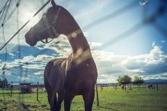 Άλογο στον τομέα στο ηλιόλουστο στήριγμα της Αυστρίας Styria ημέρας Στοκ φωτογραφίες με δικαίωμα ελεύθερης χρήσης