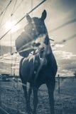 Άλογο στον τομέα στο ηλιόλουστο στήριγμα της Αυστρίας Styria ημέρας Στοκ Εικόνες