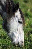 Άλογο στον τομέα στοκ φωτογραφία με δικαίωμα ελεύθερης χρήσης