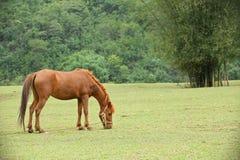 Άλογο στον τομέα Στοκ φωτογραφίες με δικαίωμα ελεύθερης χρήσης