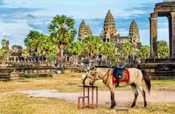 Άλογο στους ναούς Angkor Wat στην Καμπότζη Στοκ Φωτογραφίες