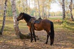 Άλογο στο δάσος. Στοκ Εικόνα