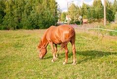 Άλογο στο αγρόκτημα Στοκ φωτογραφία με δικαίωμα ελεύθερης χρήσης